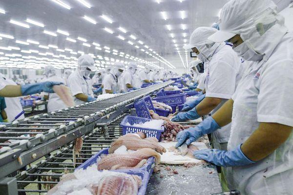 Thêm Thủy sản Cần Thơ (CCA) báo cáo lợi nhuận giảm 94% trong quý III/2020