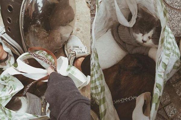 Dở khóc dở cười cảnh chàng trai ôm 4 bé mèo chạy bộ 16 tầng khi chung cư báo cháy