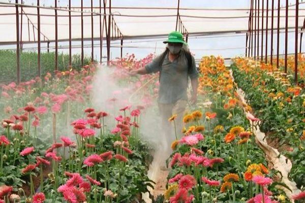 Danh mục thuốc bảo vệ thực vật được phép sử dụng từ 25/10/2020