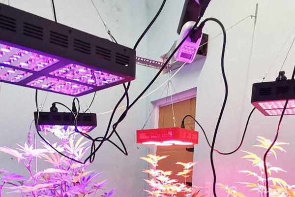 Lâm Đồng: Phát hiện trồng cây cần sa trong nhà vệ sinh bằng công nghệ đèn chiếu