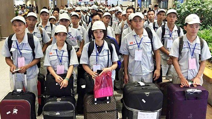 Kết quả hình ảnh cho Tu nghiệp sinh Nhật Bản, nguồn nhân lực bị lãng phí