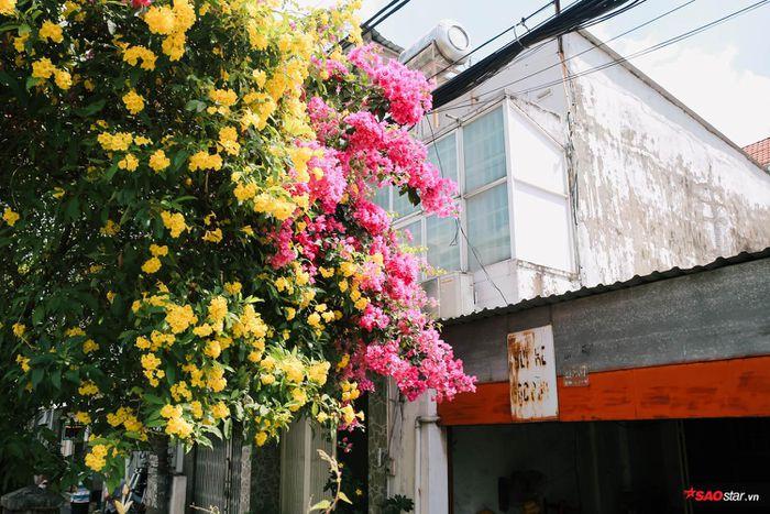 Hoa chen cùng hoa giấy bung tỏa giữa nắng.