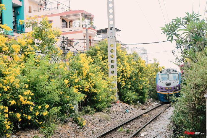 Những mùa chuông vàng rợp cả con đường tàu hỏa.