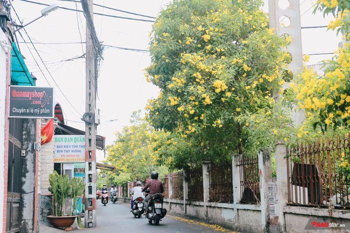 Lâu lắm, ở Sài Gòn mới có những mùa hoa đẹp nao lòng như thế!