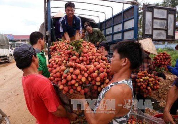 Báo Bnews: Bắc Giang vui mùa vải sớm