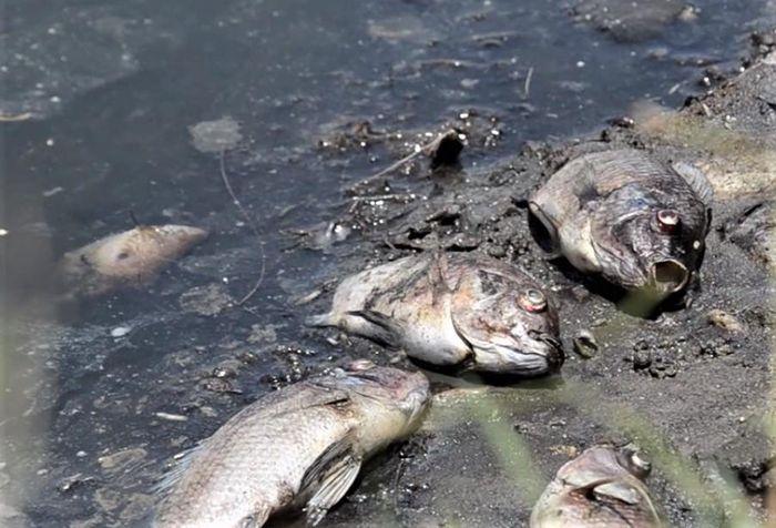 Báo Văn Hoá: Quảng Ngãi: Cá chết nổi trắng hồ không rõ nguyên nhân
