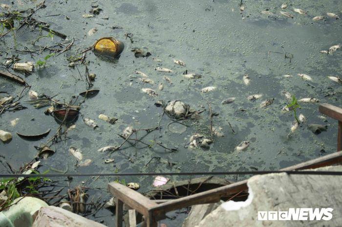 Báo VTC: Cá chết 'kỷ lục' nổi trắng hồ Đồng Làng, dân hoang mang không rõ nguyên nhân