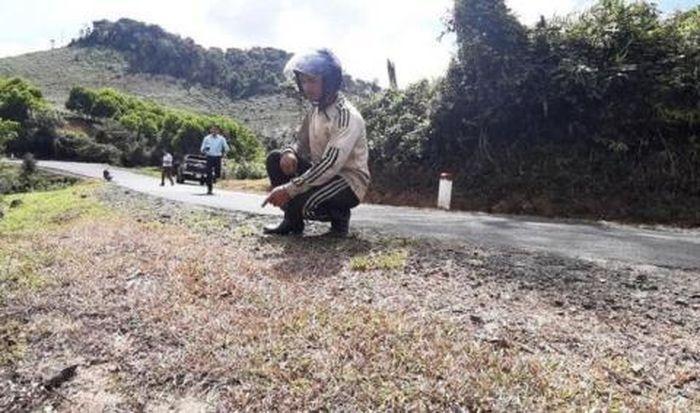 Báo Đất Việt: Phun thuốc diệt cỏ dọc quốc lộ: 'Tại công nhân tự làm?'