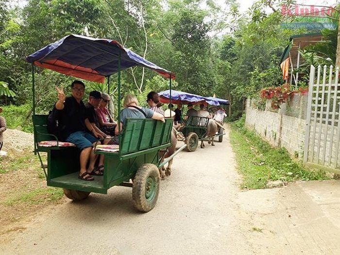 Độc đáo vận tải du khách bằng xe trâu của HTX vận tải du lịch Hùng Dũng.