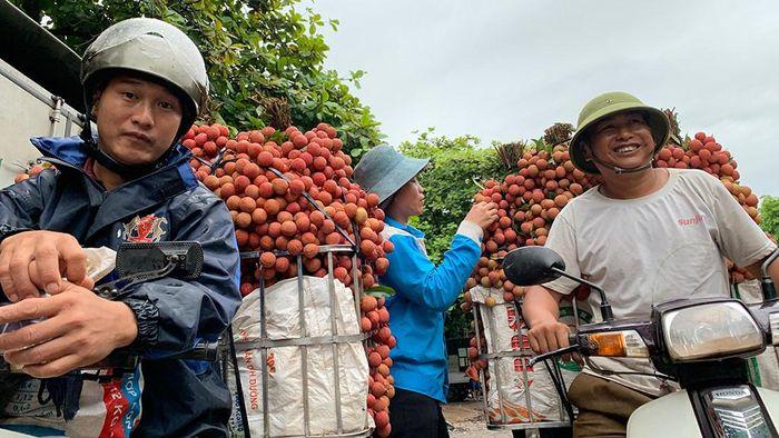 Báo Thanh Niên: Giá vải thiều kỷ lục, nhà vườn Bắc Giang thắng lớn