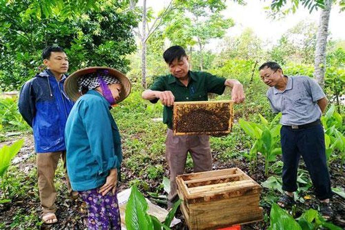Báo Doanh Nghiệp: Bắc Giang: Nuôi ong nội theo hướng VietGAHP