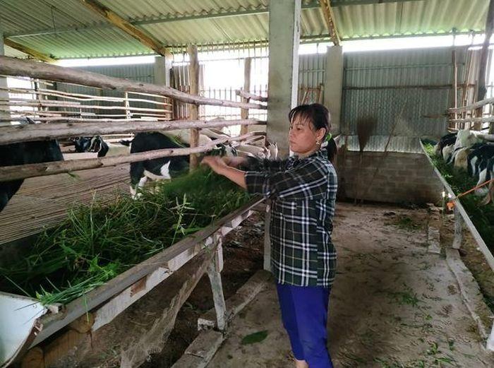 Báo KTNT: Nuôi dê vỗ béo ở Bắc Giang: Hướng phát triển mới