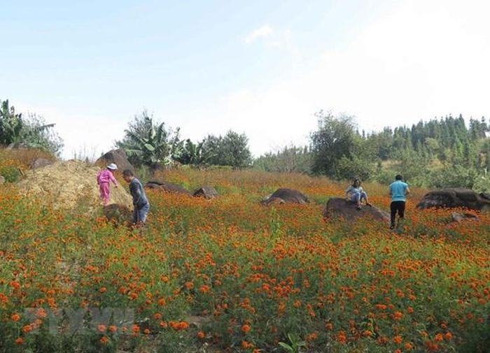 Cảnh quan khu vực quanh hồ Noong U là các vườn hoa đua nhau khoe sắc. (Ảnh: Xuân Tiến/TTXVN)