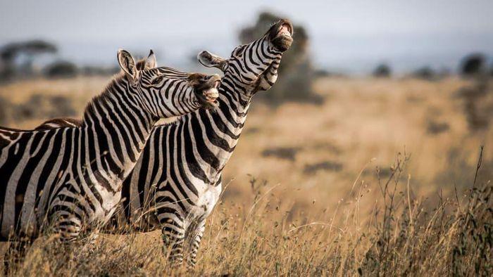 'Cười bò' với những bức ảnh động vật siêu đáng yêu trong tuần