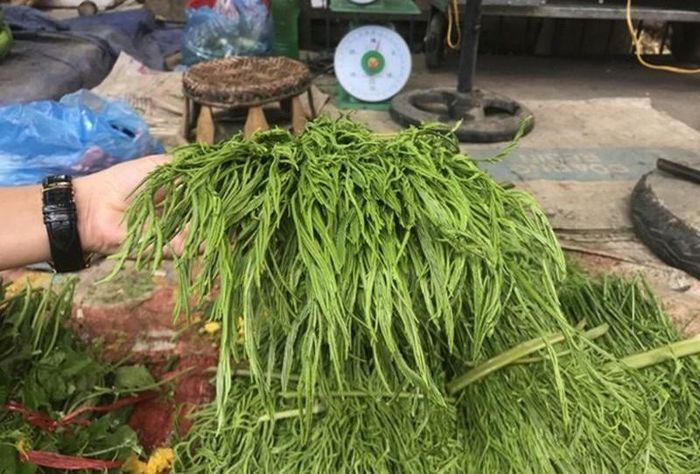 Sở dĩ người ta đặt cho nó cái tên rau thối là cũng bởi vì mùi hôi nồng mà dù có đứng cách xa cả mấy mét vẫn dễ phát hiện ra.