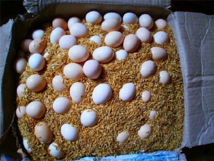 Cách bảo quản trứng tại nhà lâu không lo bị hỏng - ảnh 2.