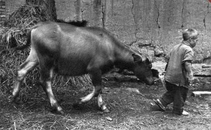 Kỳ lạ vùng đất sinh sống của 'người lùn' có thật trên Trái đất - ảnh 7.