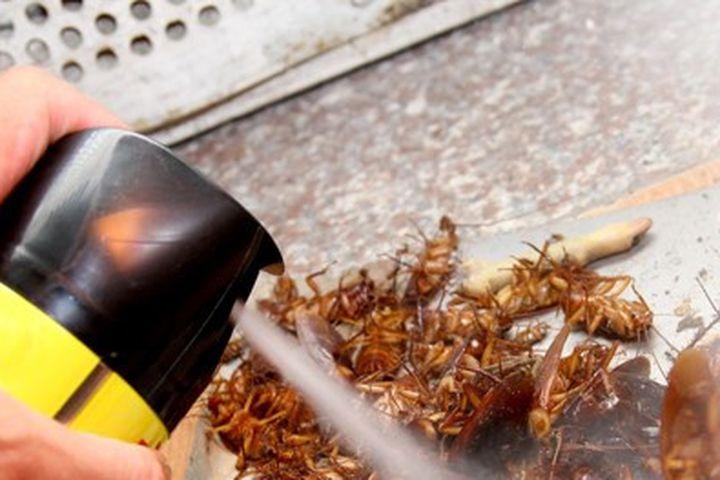 Quá nguy hiểm khi dùng thuốc xịt côn trùng - Báo Chất Lượng Việt Nam